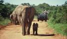 safari-in-south-Africa