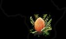 cycads Logo